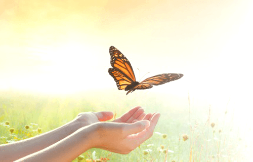Healing Naturally with Lara Park
