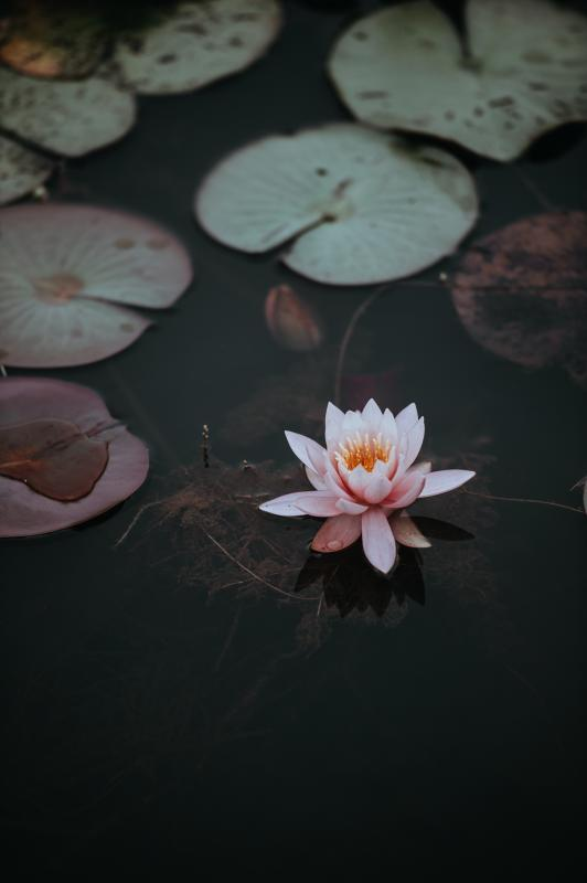 Midday Reboot Meditation