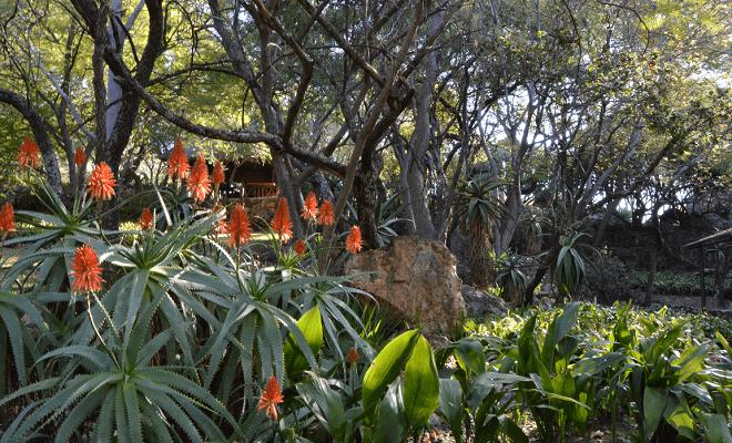 Protea Ranch
